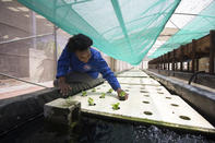 Aquaponics in South Africa